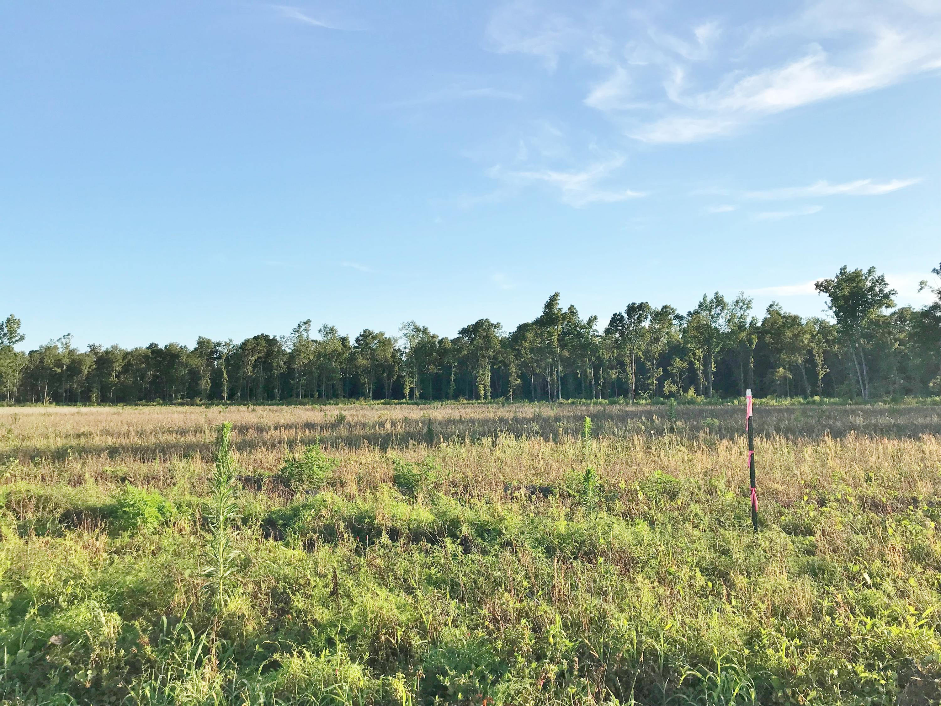 Lot 5 Coach Rd Road Holly Hill, SC 29059