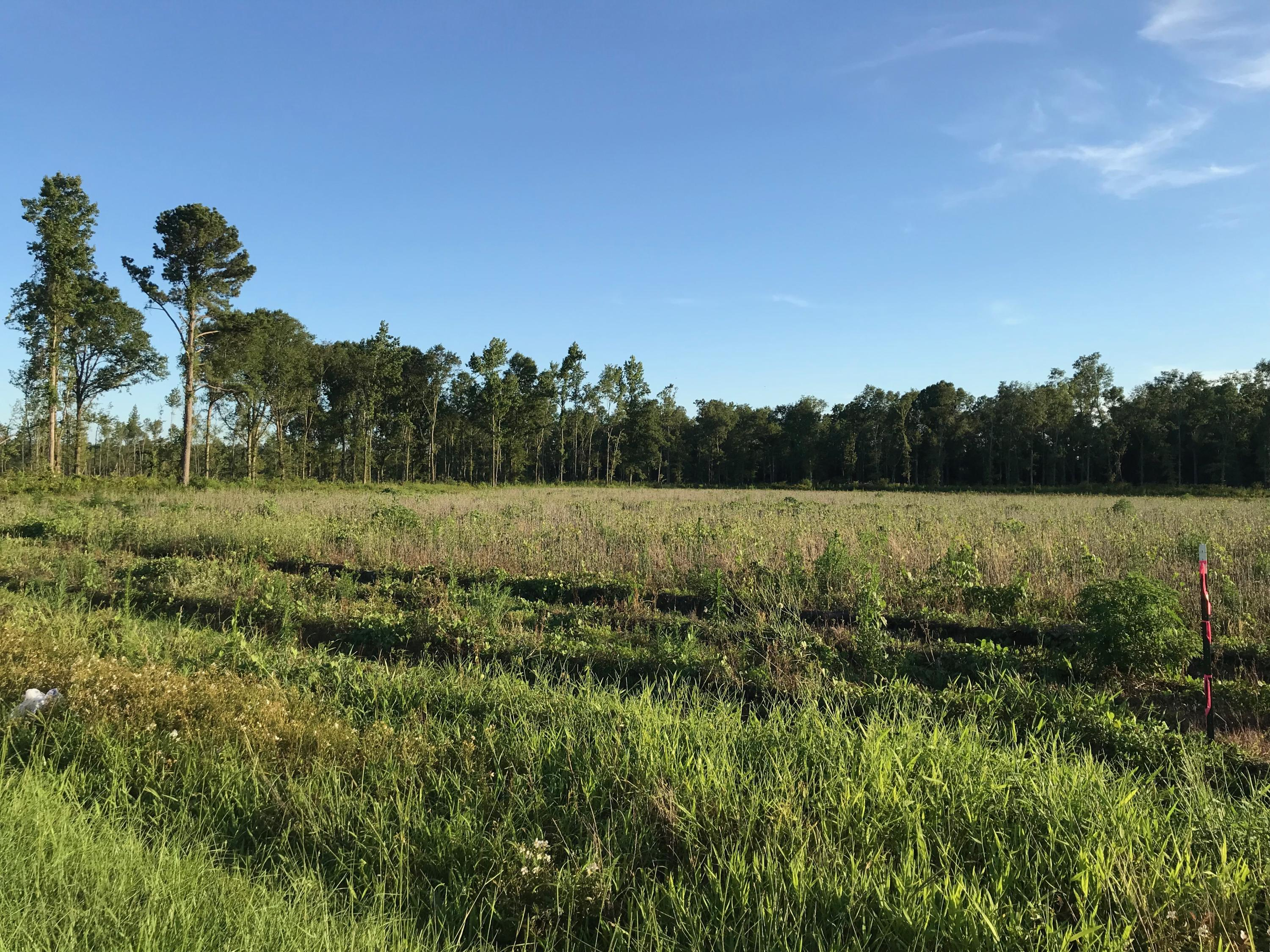 Lot 6 Coach Road Holly Hill, SC 29059