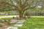 One of the 5 Grand Live Oaks