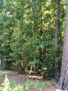 13.7 Acre Cottageville Highway Cottageville, SC 29435