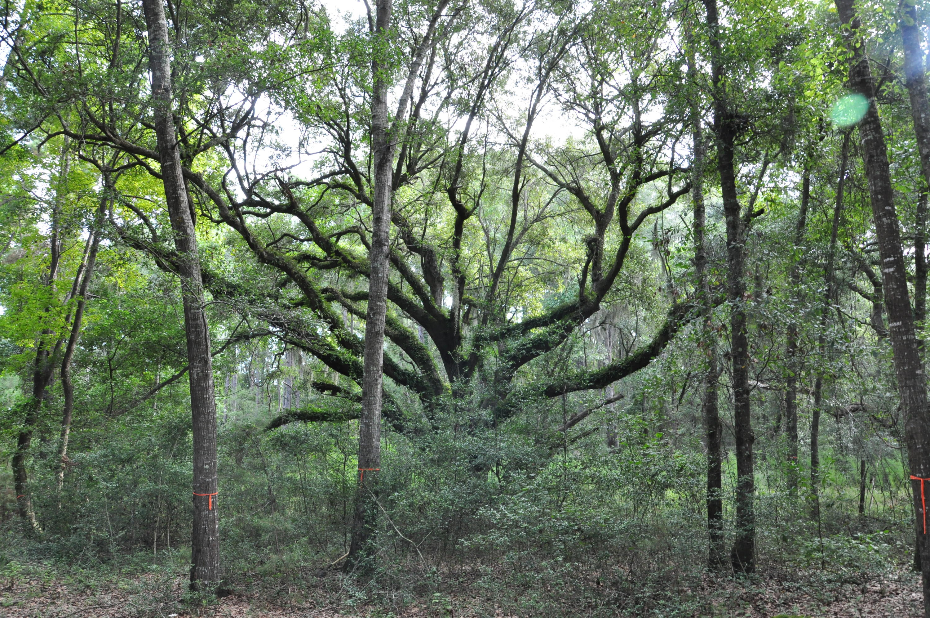 3820 Gnarled Oaks Lane Johns Island, SC 29455