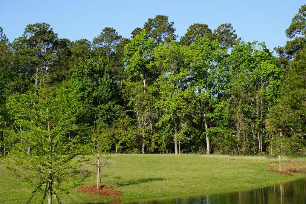 Pointe at Primus Homes For Sale - 1177 Penderlee, Mount Pleasant, SC - 26
