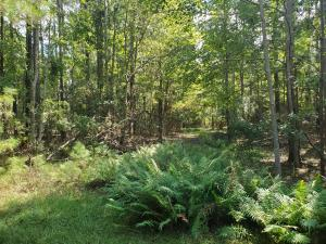 Nicely Wooded Corner Building Acreage