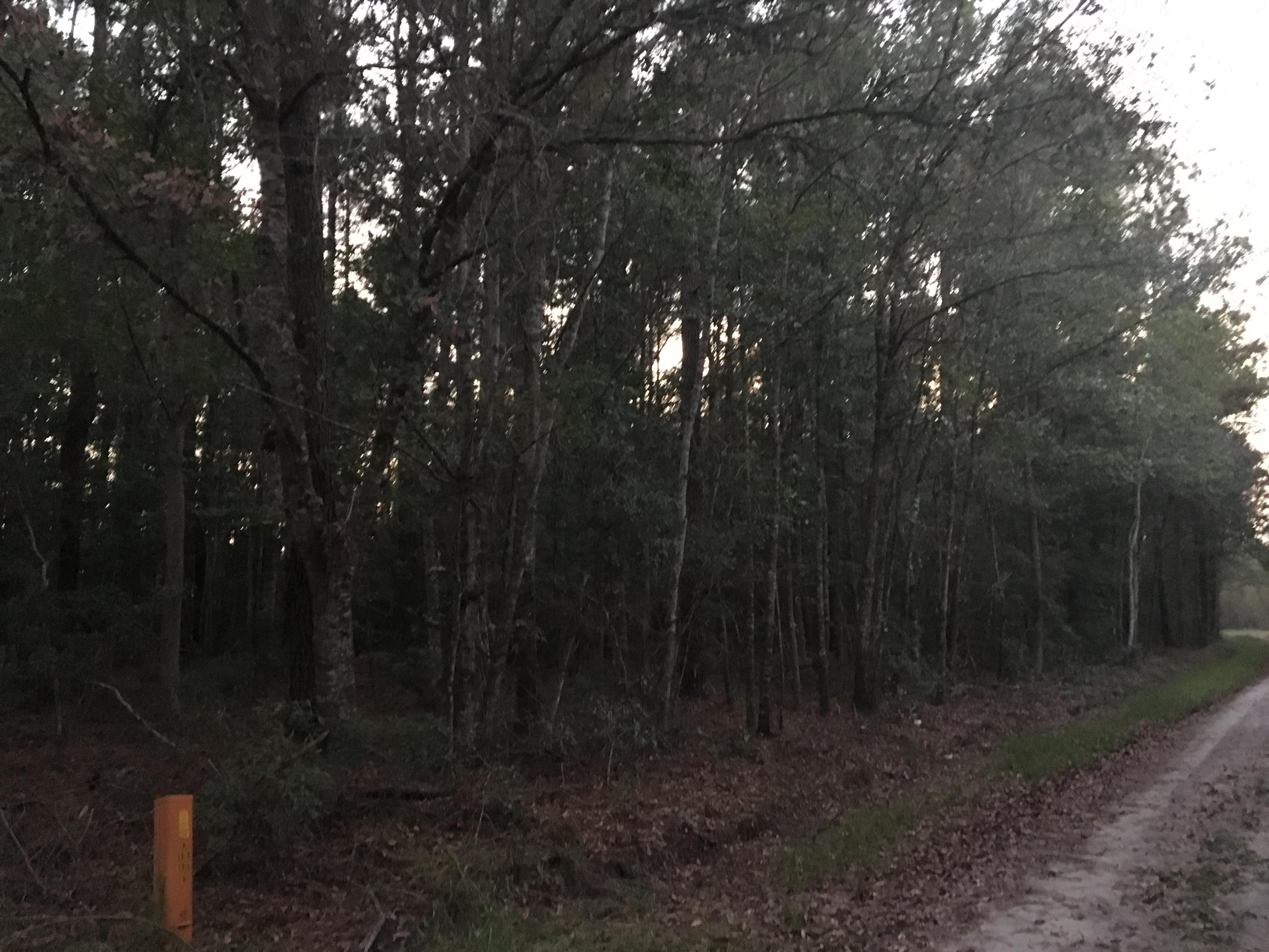 Log Cabin Lane Walterboro, SC 29488