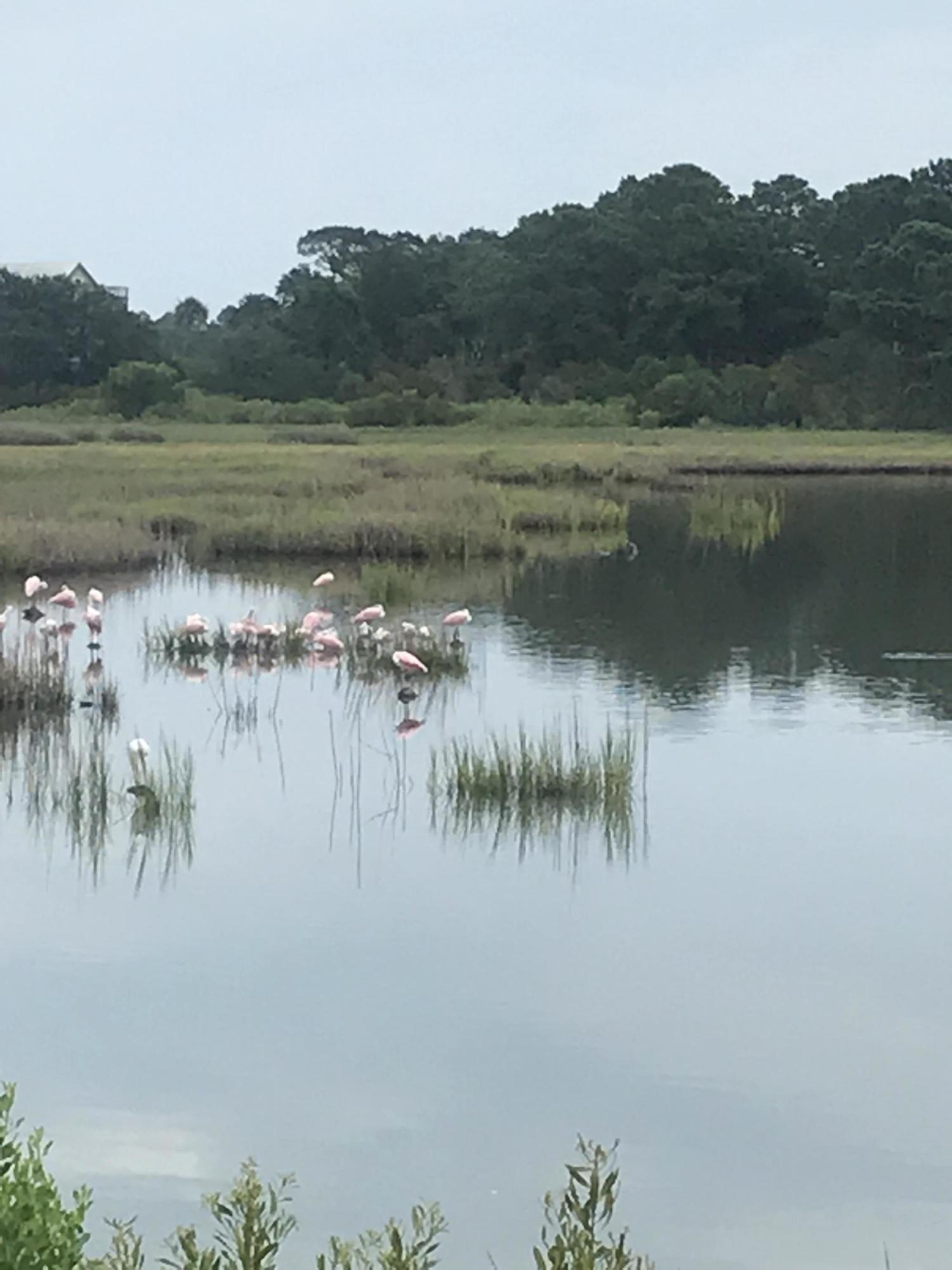 Lake Timican Lane Dewees Island, SC 29451