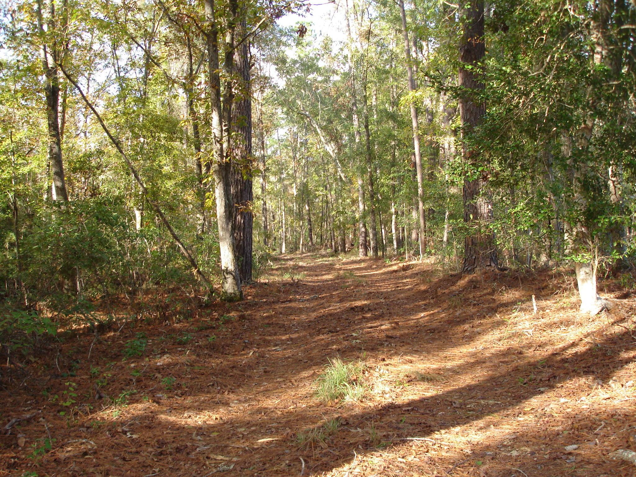 8754-B Savannah Hwy. Adams Run, SC 29426