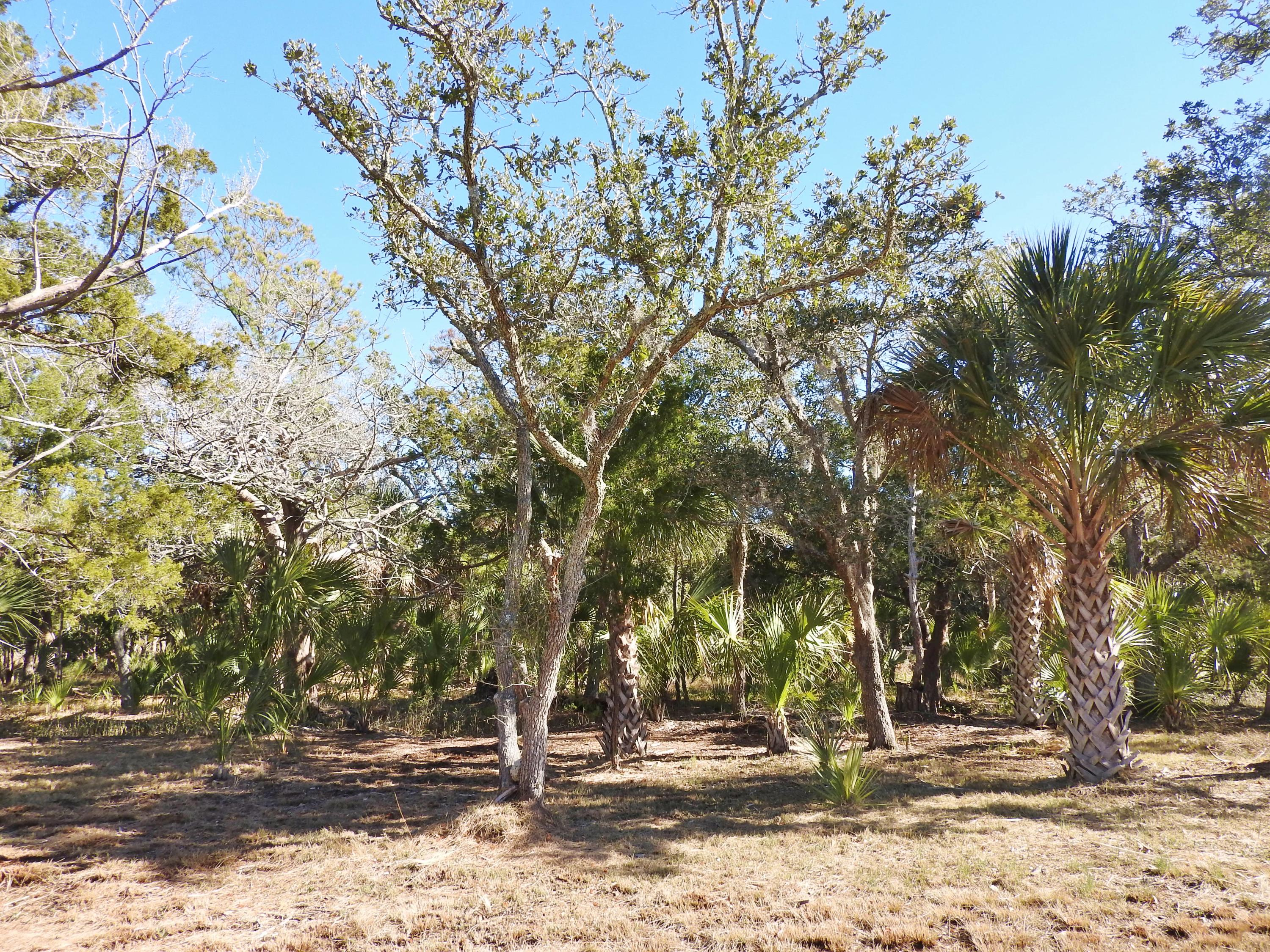 37 Hammocks Way Edisto Island, SC 29438