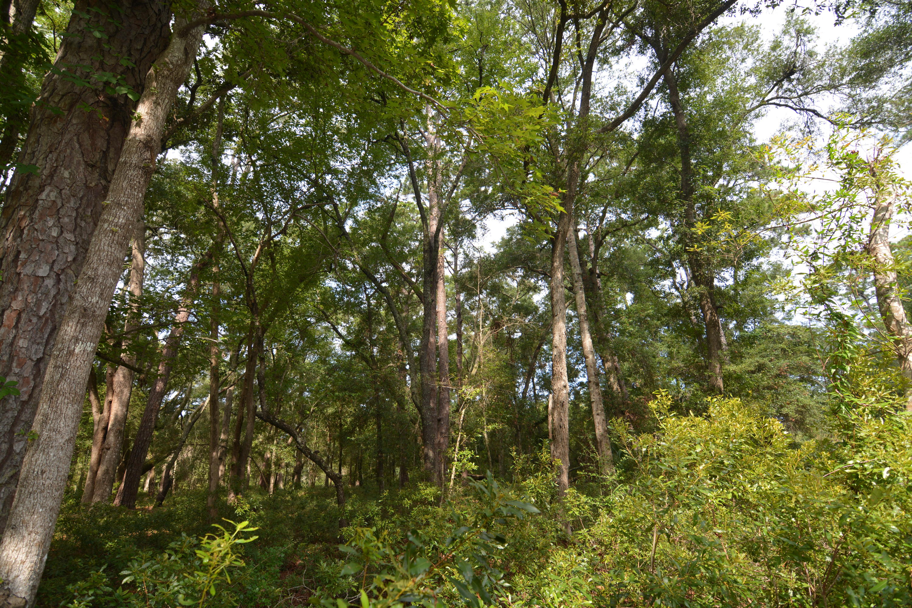 Lot 36 Foredeck Lane Edisto, SC 29438