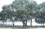 130 River Landing Drive, 1203, Charleston, SC 29492