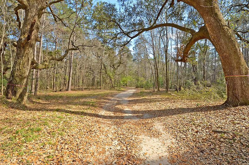 104 Blackbird Loop Summerville, Sc 29483