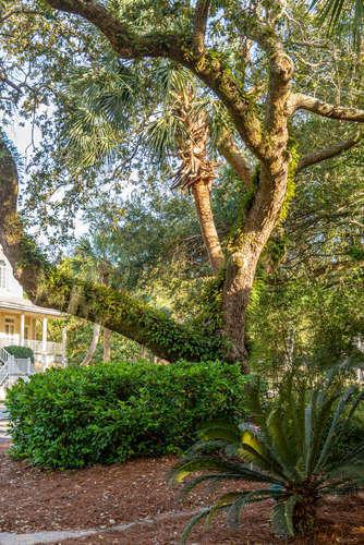 Wild Dunes Homes For Sale - 26 Beachwood, Isle of Palms, SC - 12