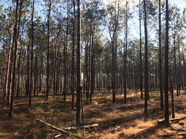Pine View Farm Road Lane, SC 29564
