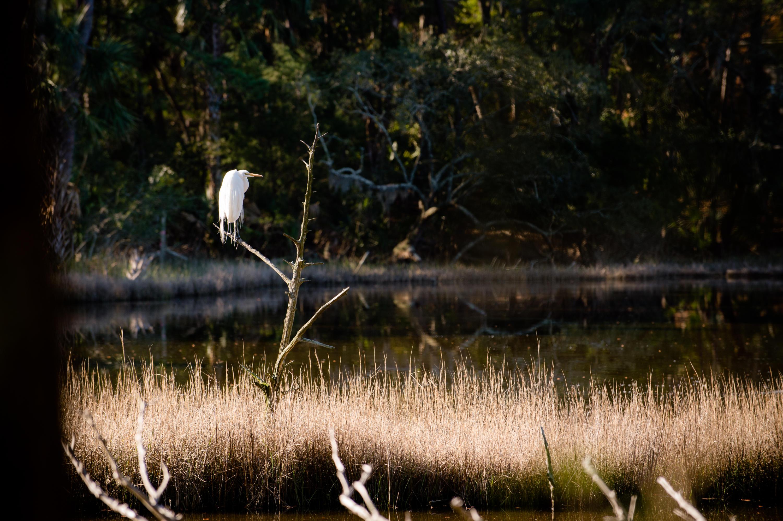 129 Blue Heron Pond Road Kiawah Island, SC 29455