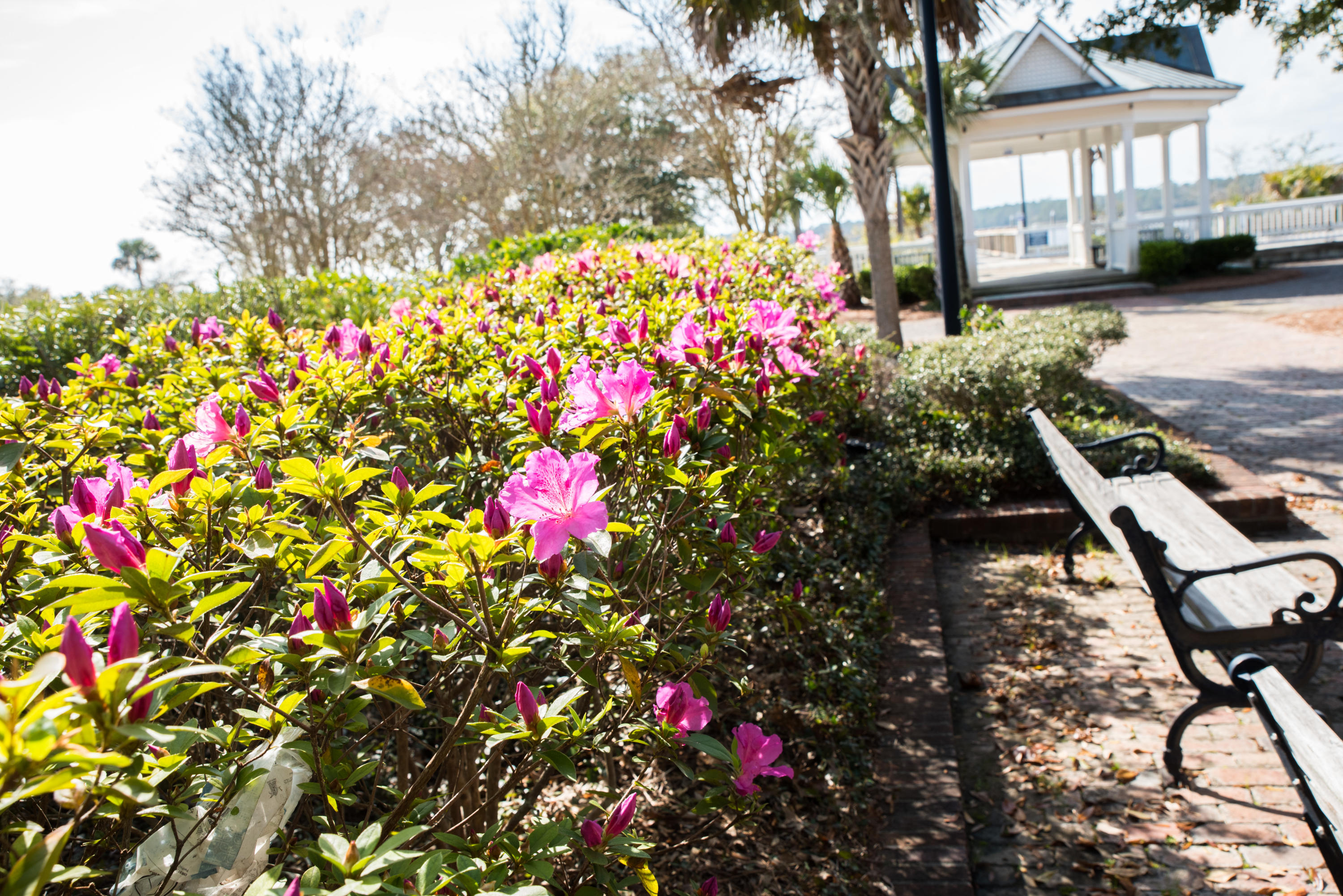 Rivertowne On The Wando Homes For Sale - 2861 Rivertowne, Mount Pleasant, SC - 6