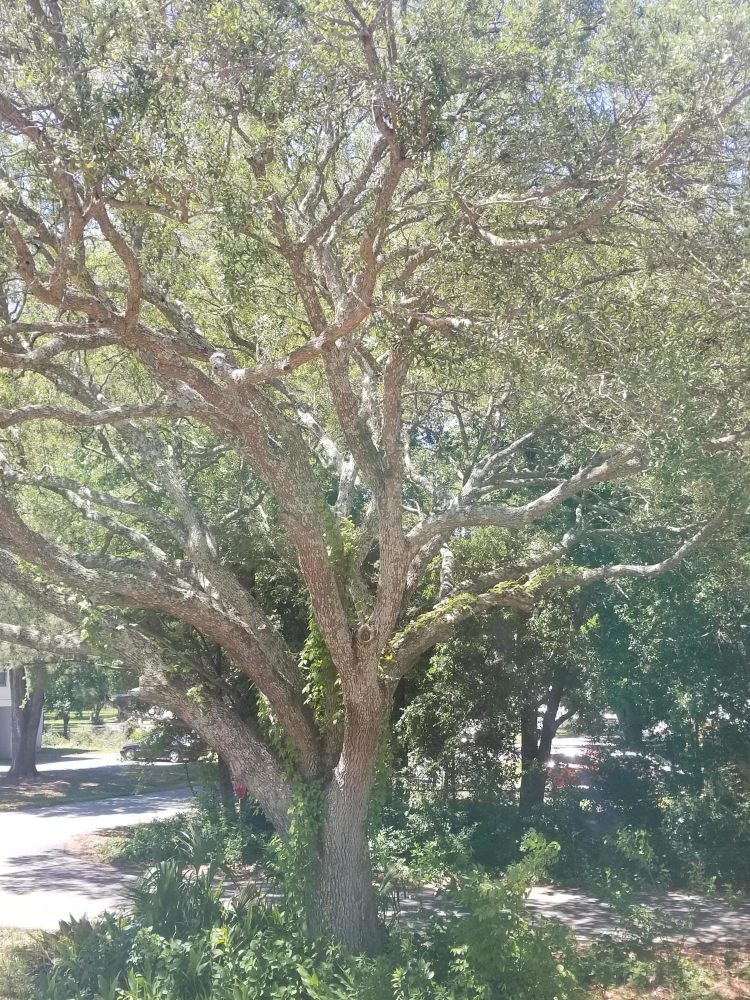 Bayfront Homes For Sale - 754 Bermuda, Charleston, SC - 2