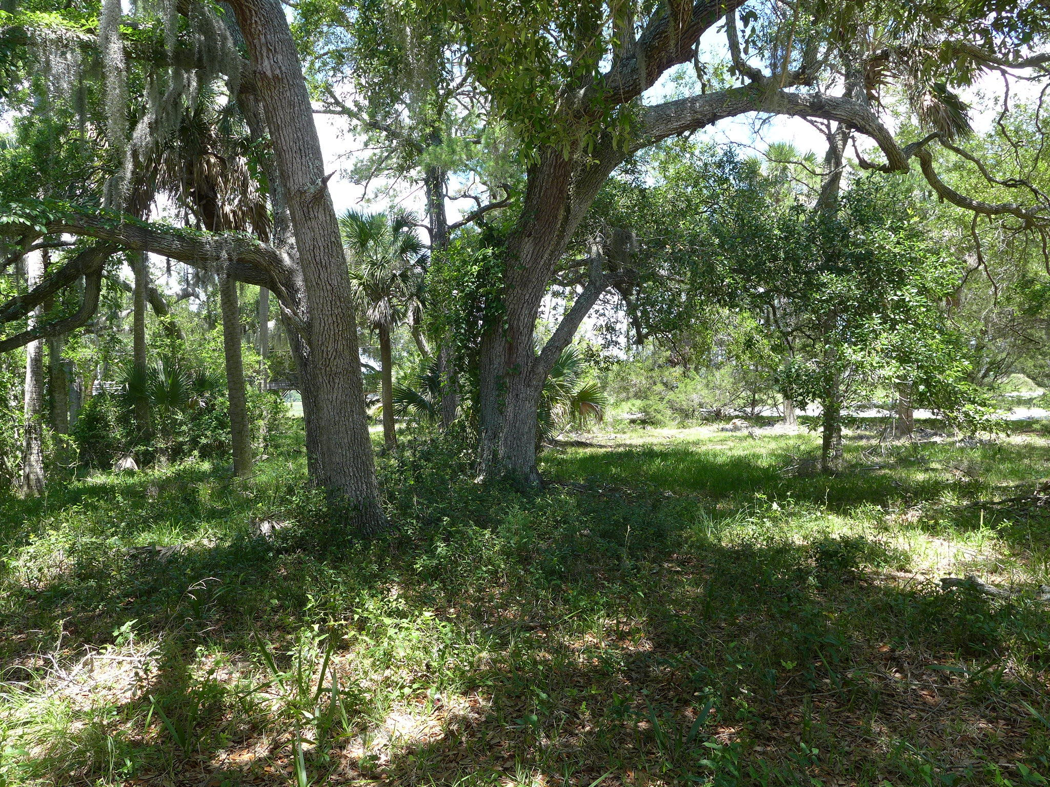 301 Jungle Road Edisto Beach, SC 29438