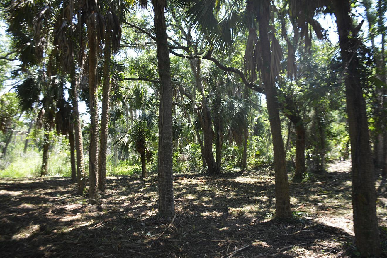 309 Jungle Road Edisto Island, SC 29438
