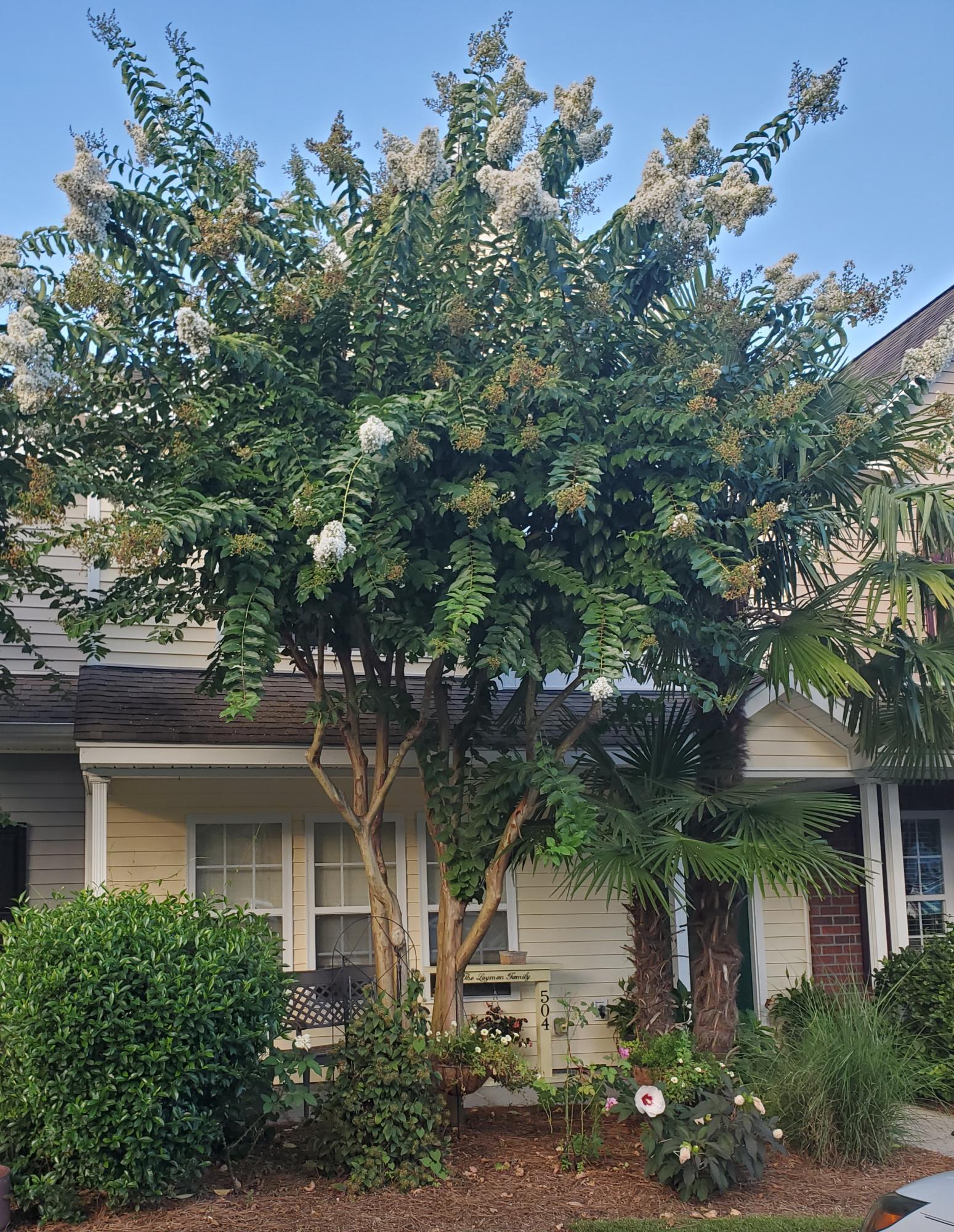 504 Pine Bluff Drive Summerville, SC 29483