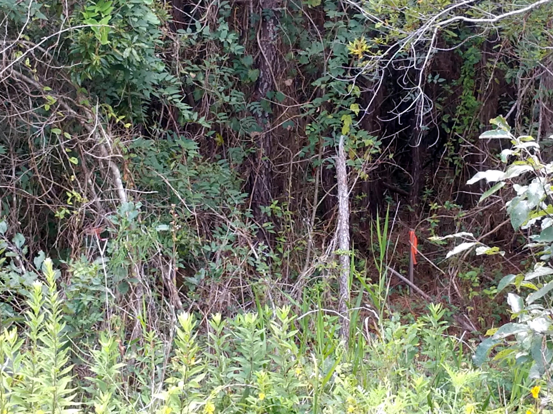 1593 Boston Grill Road Mount Pleasant, SC 29466
