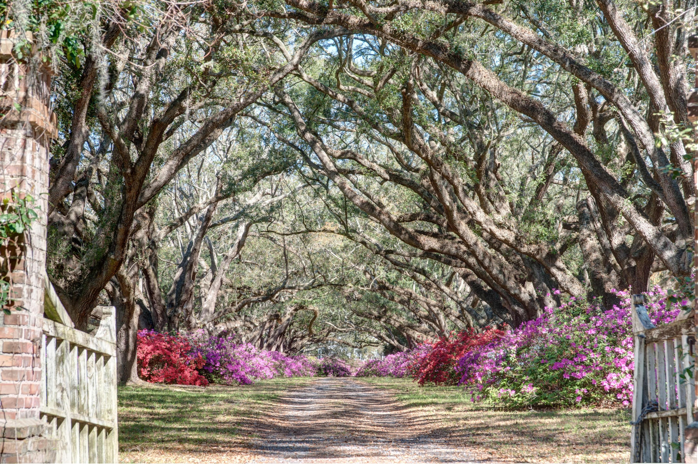 Avenue of Oaks Homes For Sale - 1083 Avenue Of Oaks, Charleston, SC - 1
