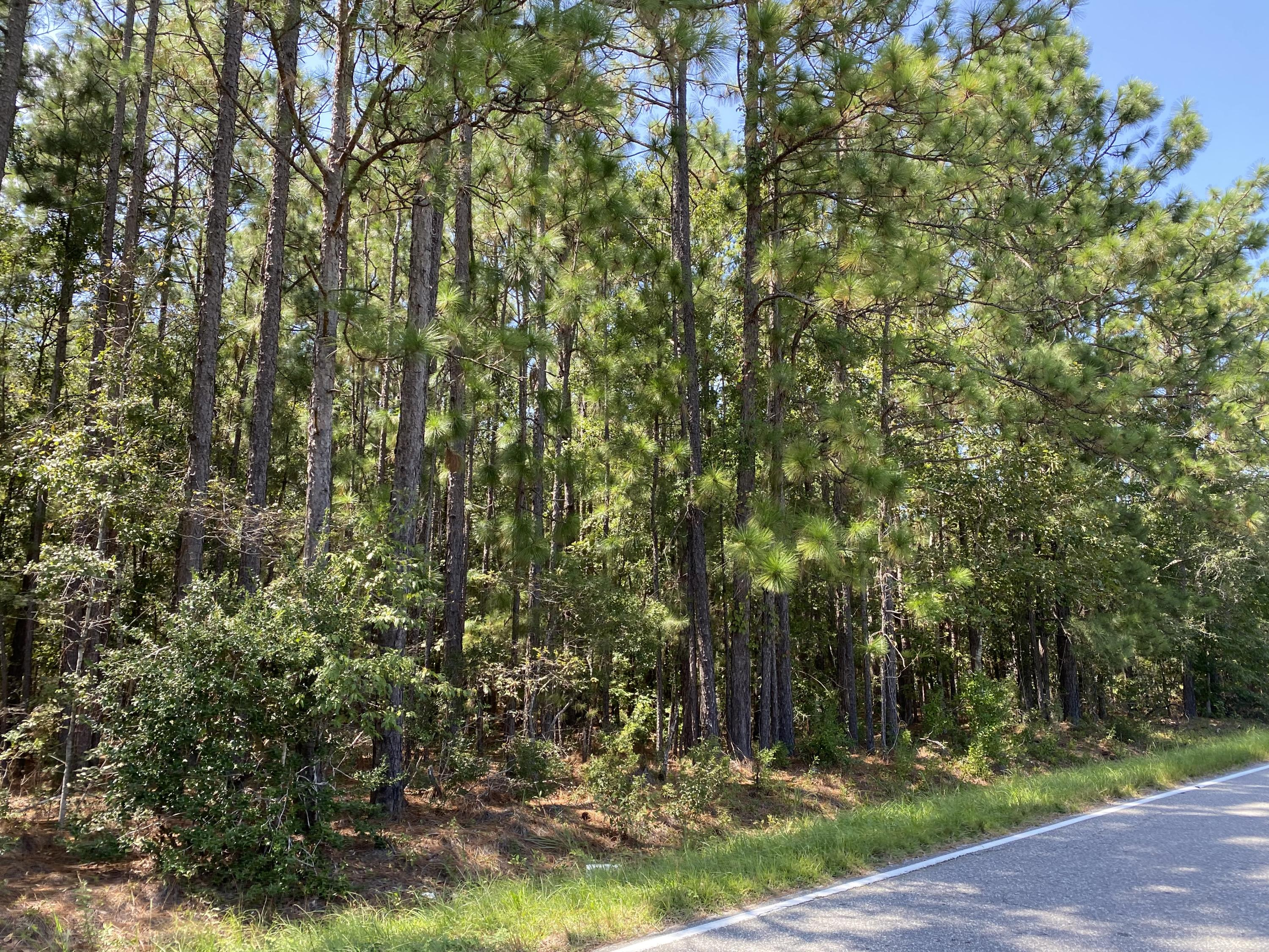 Old Dairy Rd Summerville, SC 29483