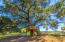 tree house in an ancient live oak for hours of imaginative fun