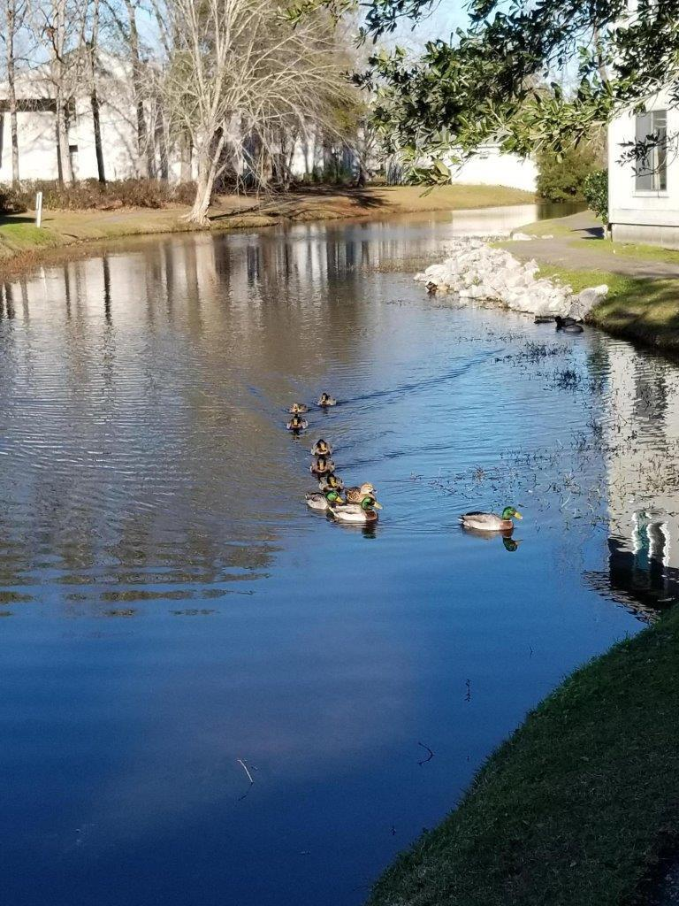 Greenslake Condominiums Homes For Sale - 203 Greenmeadow, Goose Creek, SC - 13