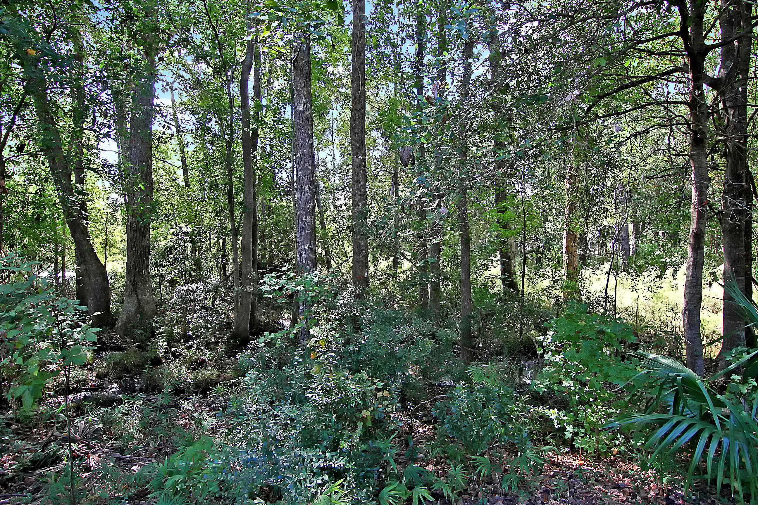 Laurel Grove Homes For Sale - 1423 Whispering Oak, Mount Pleasant, SC - 0