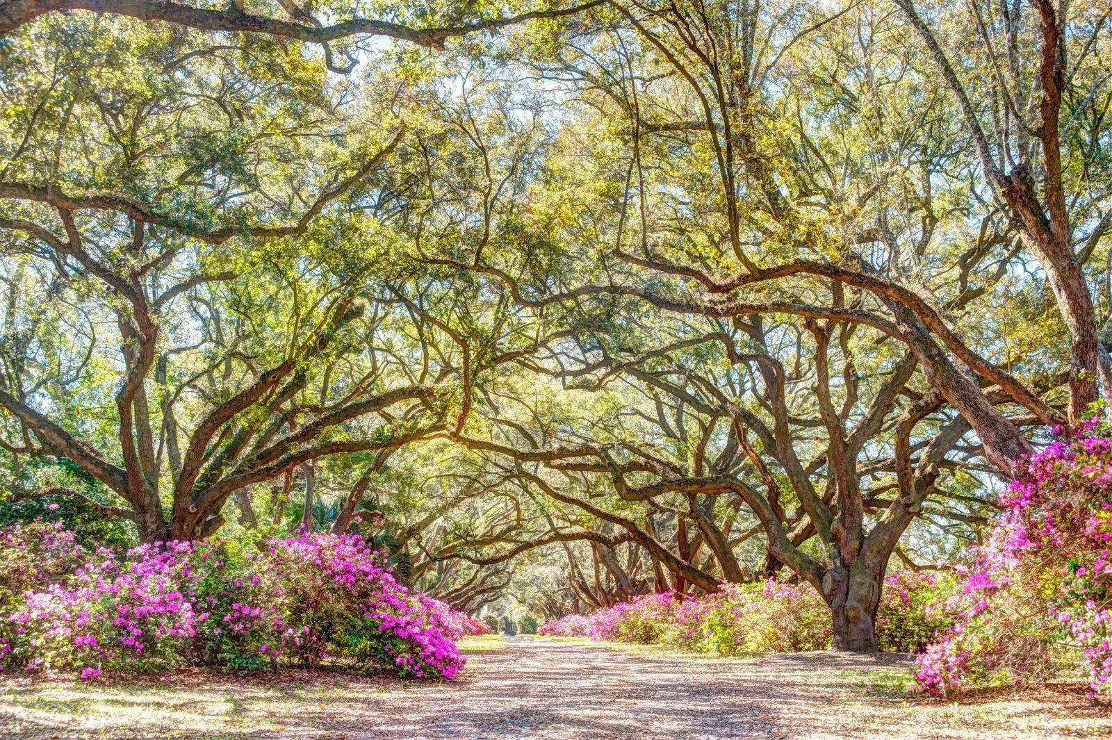 Avenue of Oaks Homes For Sale - 1097 Avenue Of Oaks, Charleston, SC - 6