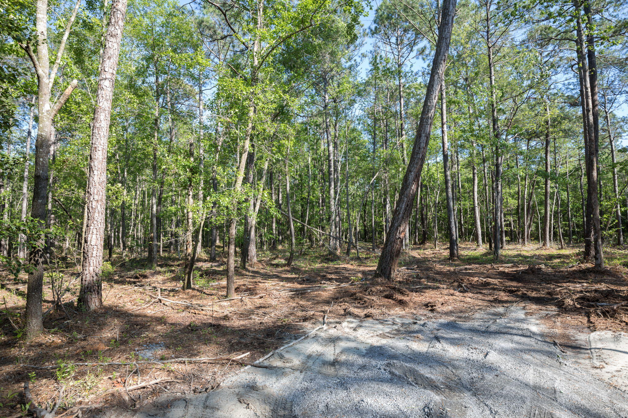 Lot 3 White Road Awendaw, SC 29429