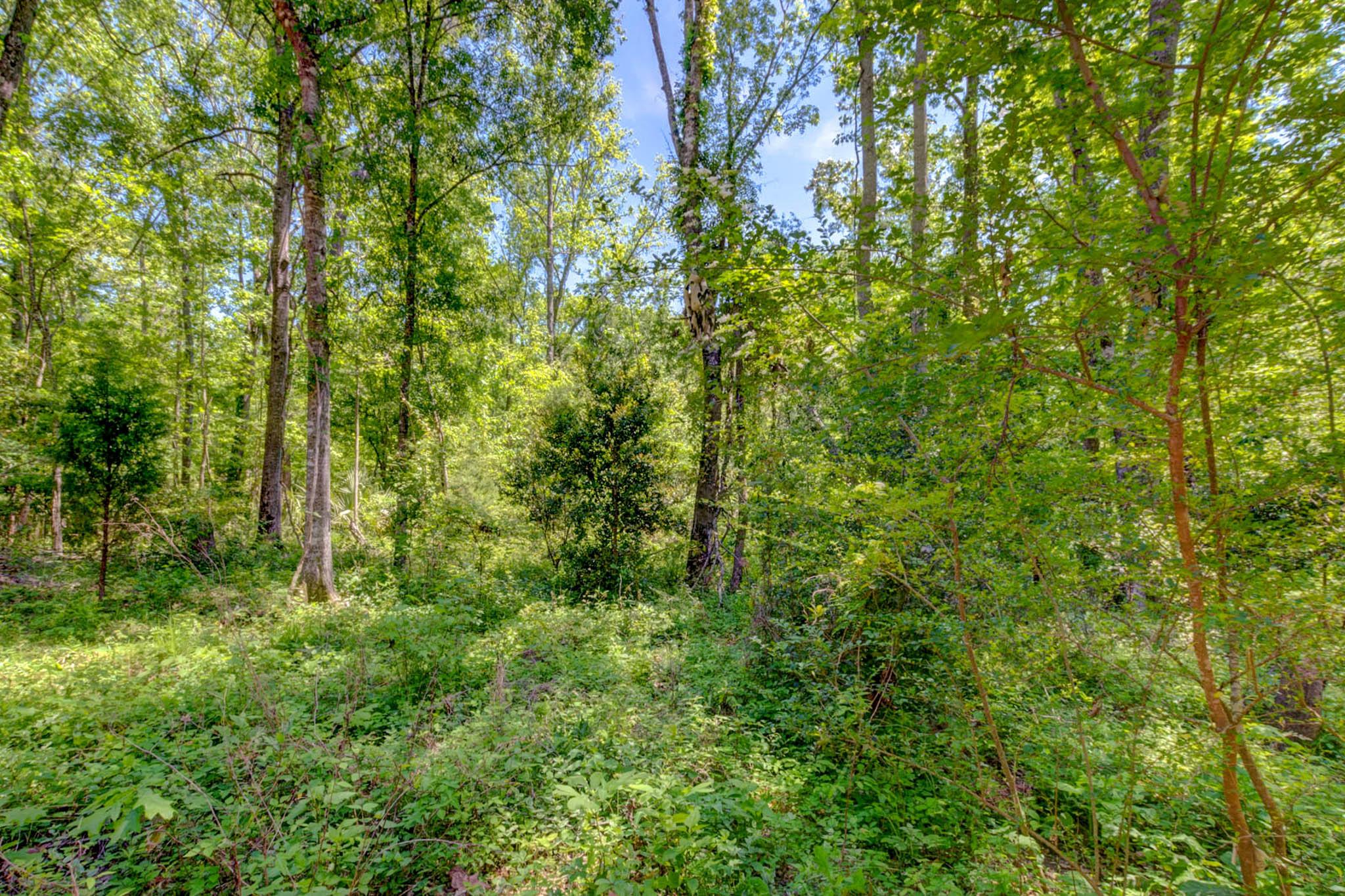 430 Barfield Drive Summerville, SC 29485