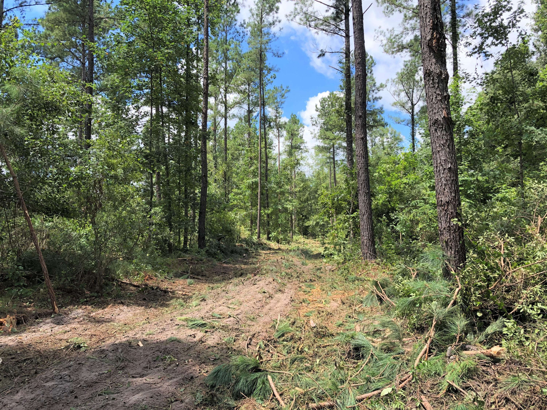 Calamus Pond Road Summerville, SC 29486