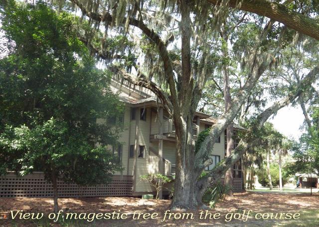 855 Club Cottage Road Edisto Island, SC 29438