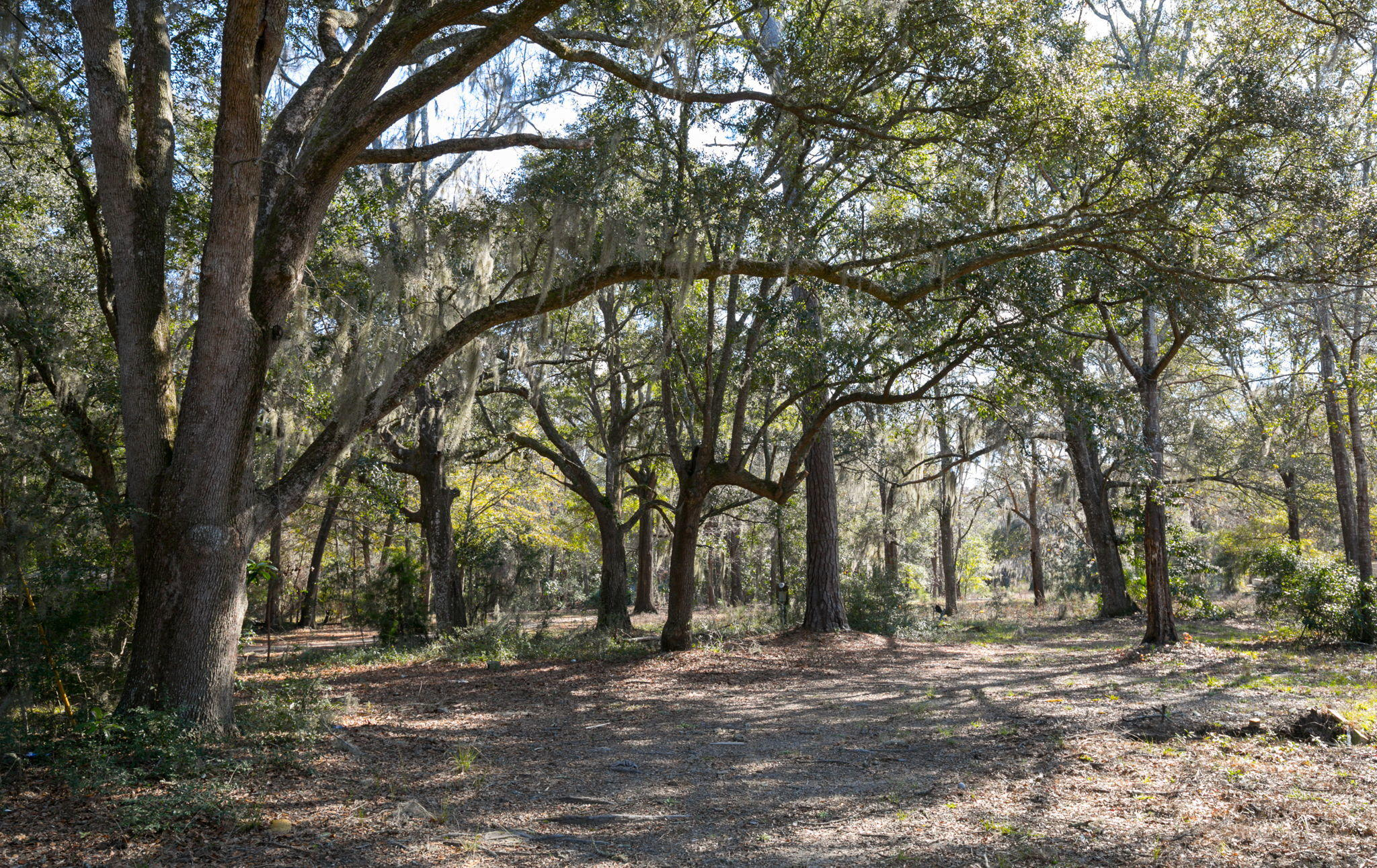 2591 Bohicket Road Johns Island, SC 29455