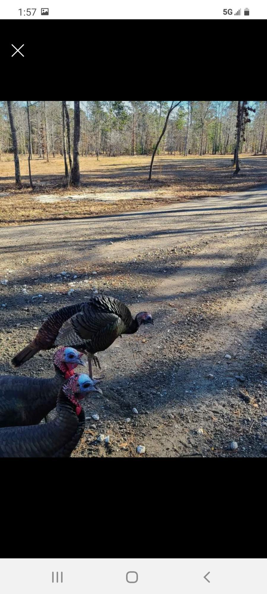 Falling Leaves Trail Bonneau, SC 29431