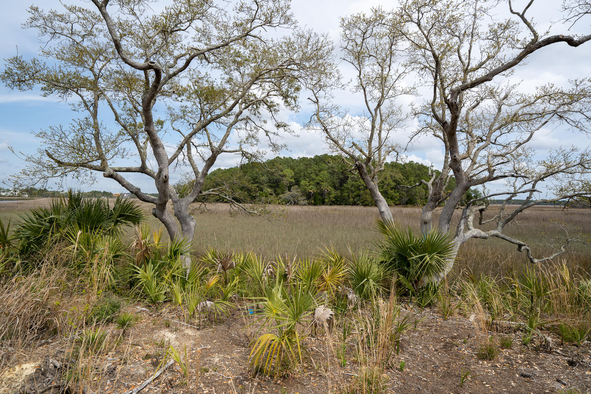Daniel Island Lots For Sale - 364 Bayley, Charleston, SC - 44