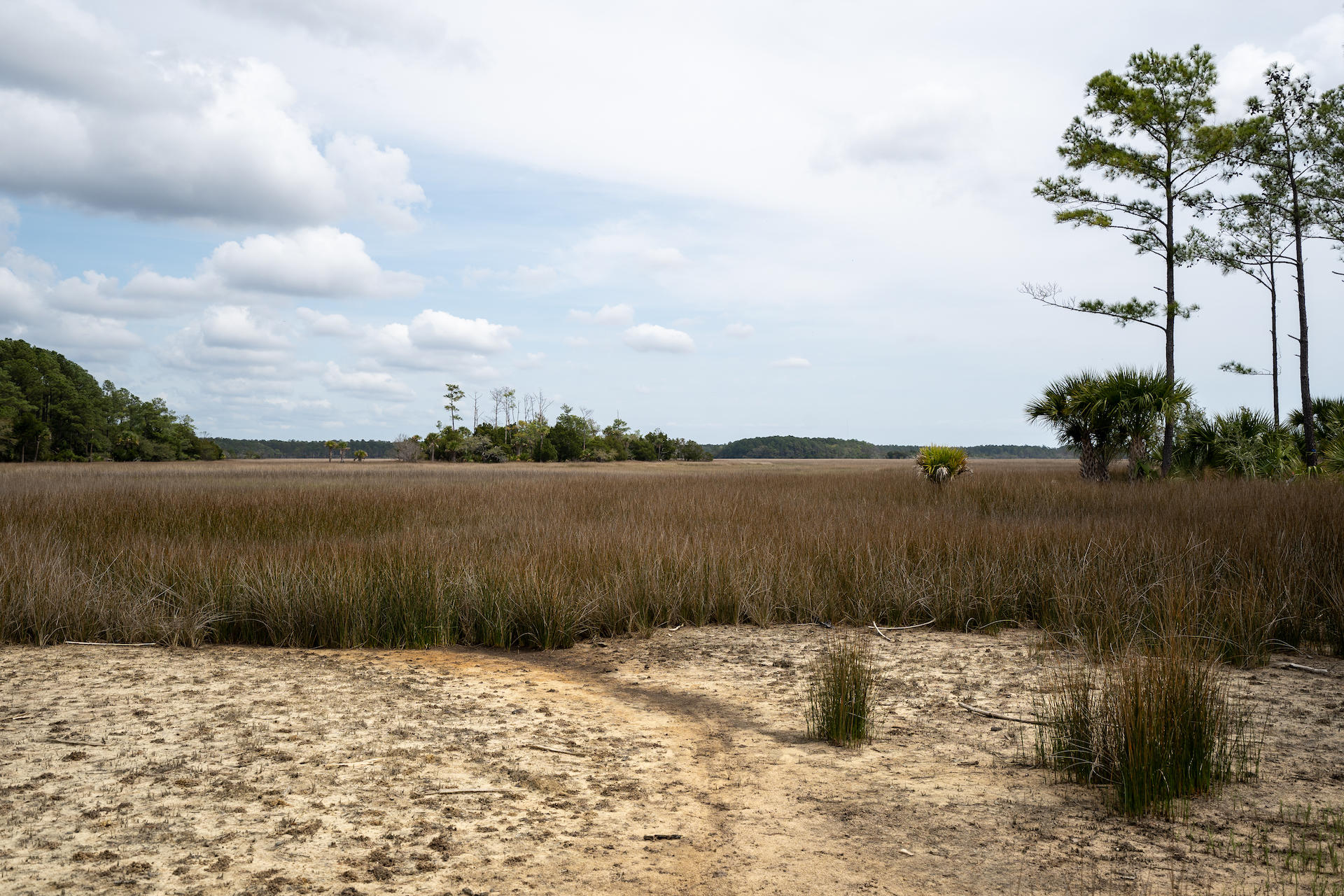 Daniel Island Lots For Sale - 364 Bayley, Charleston, SC - 26