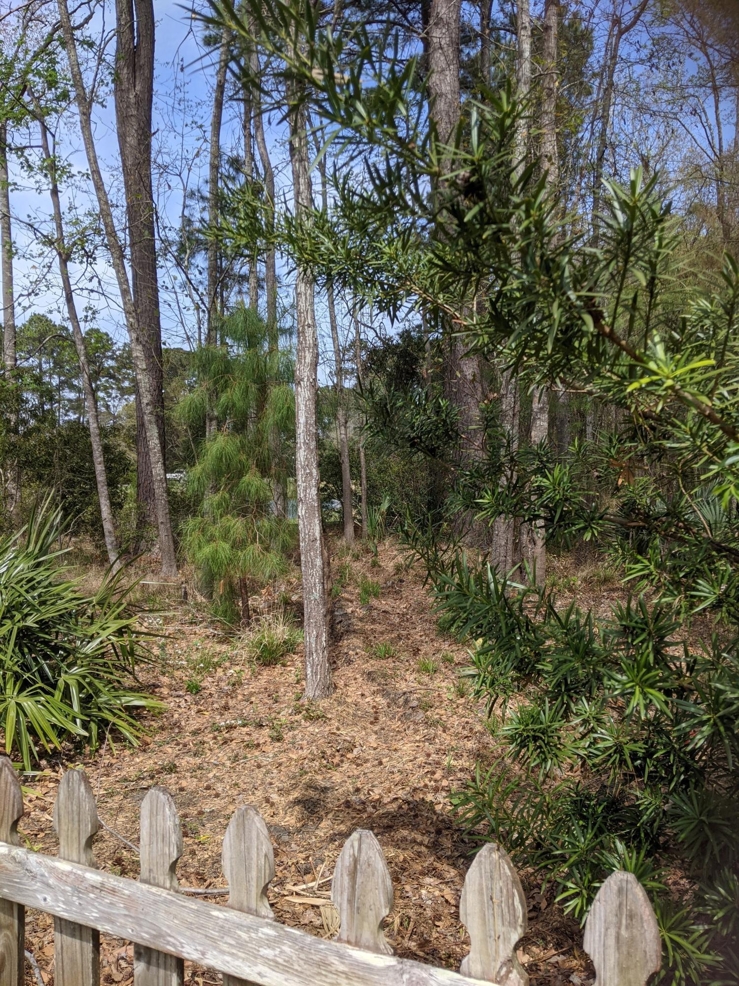 Park West Homes For Sale - 1505 Huxley, Mount Pleasant, SC - 12