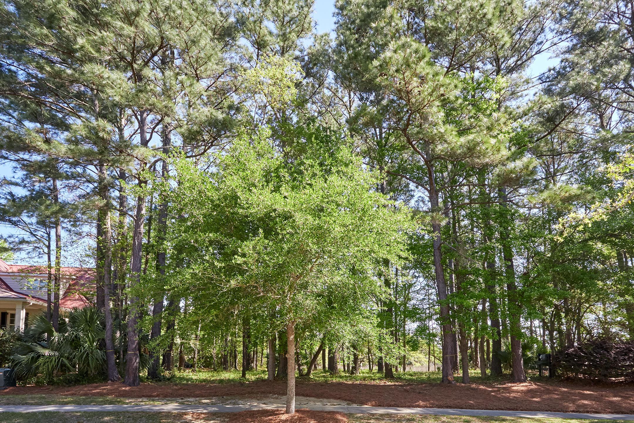 Daniel Island Park Lots For Sale - 334 Ralston Creek, Charleston, SC - 29