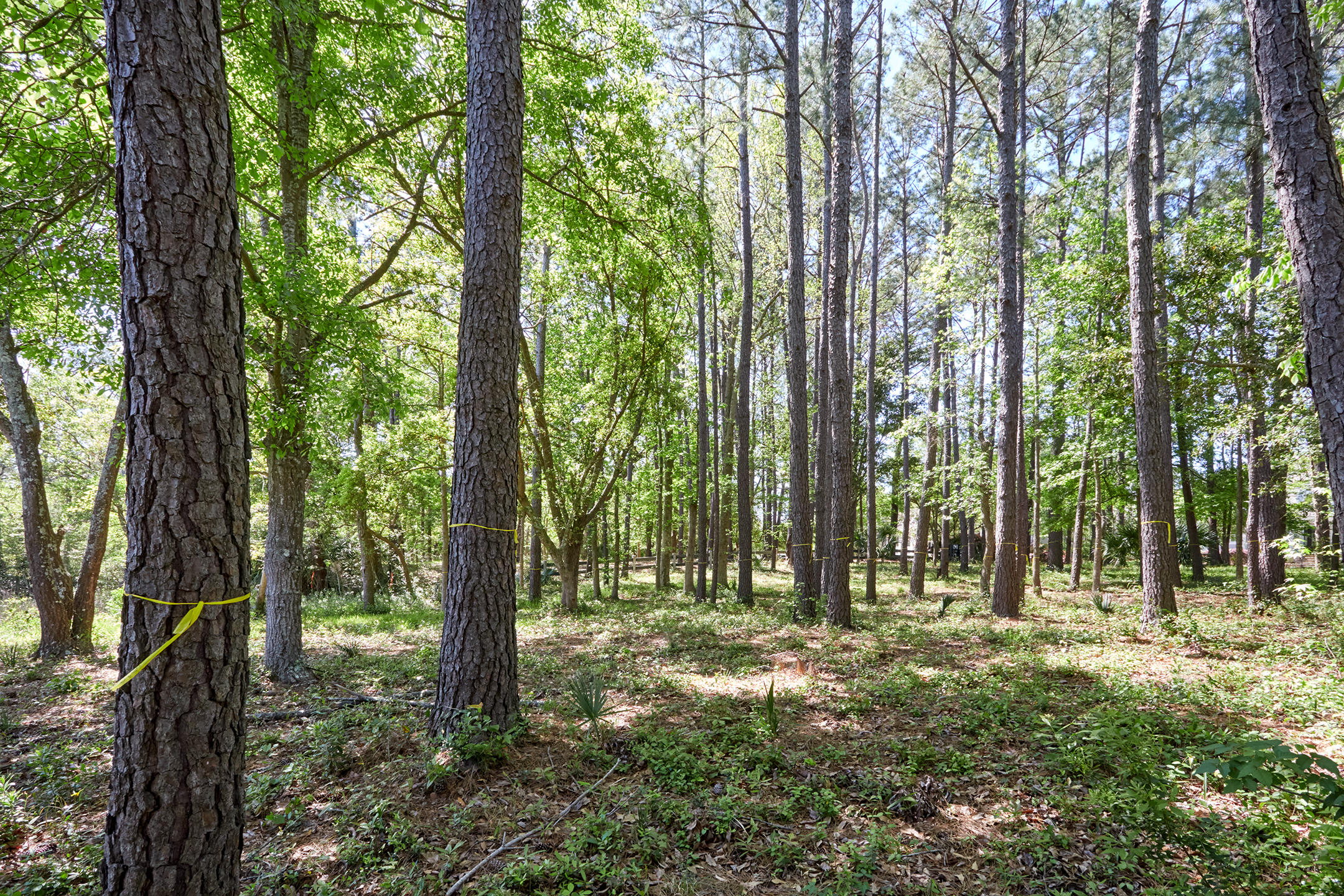 Daniel Island Park Lots For Sale - 334 Ralston Creek, Charleston, SC - 42