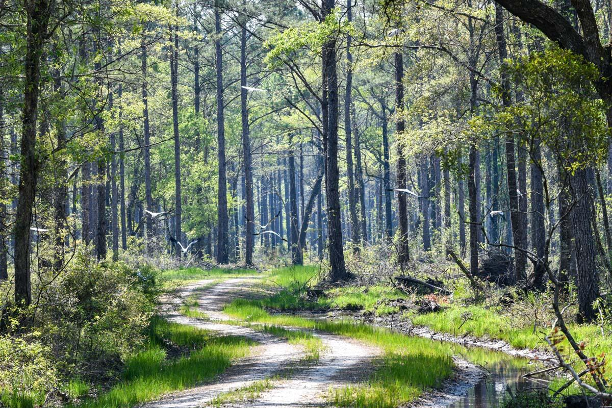 Salkehatchie Road Early Branch, SC 29916