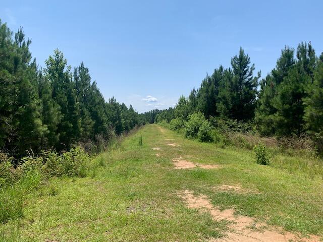 Cedar Swamp Road Kingstree, SC 29556