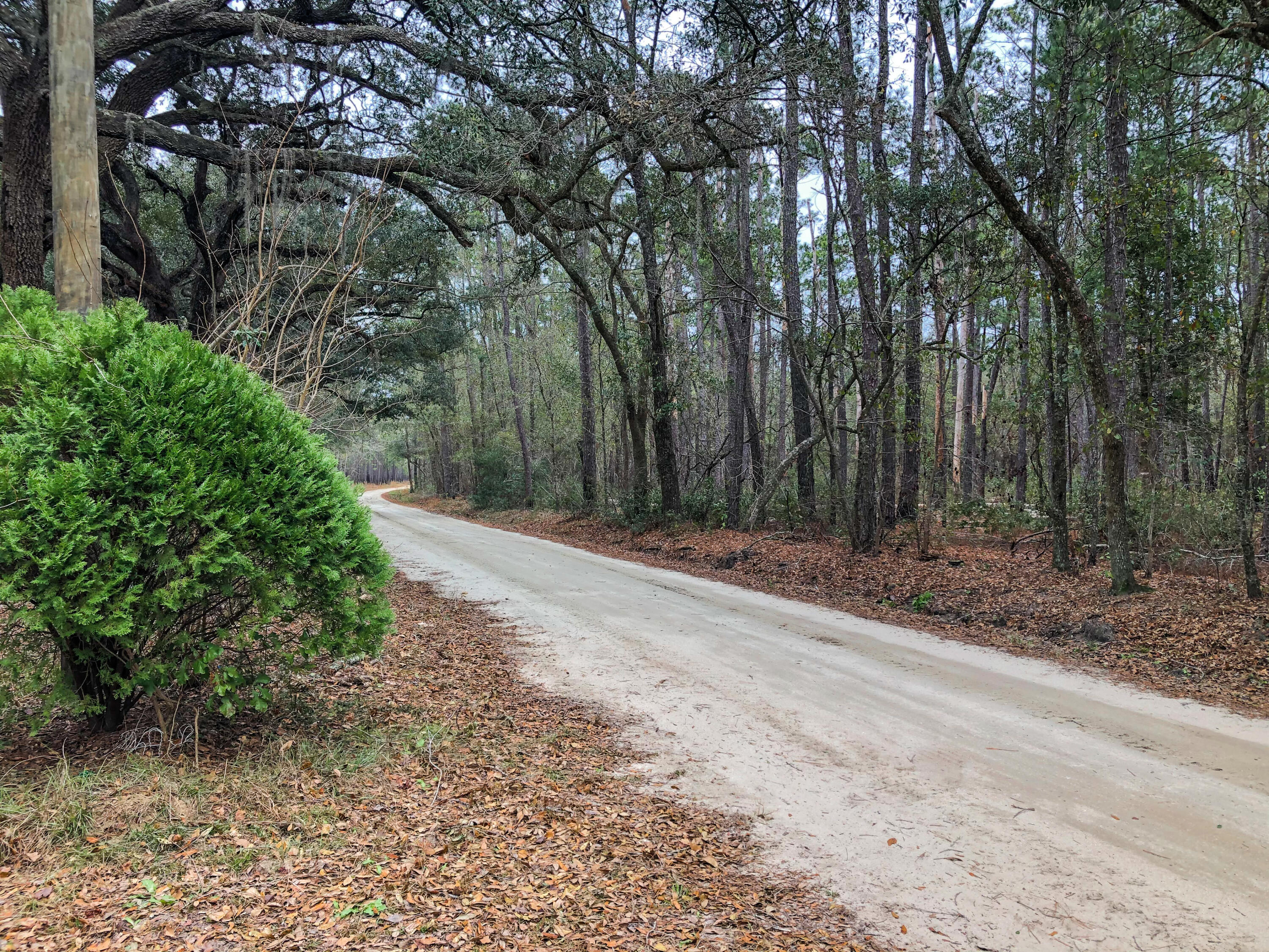 Large homesite with two sides bordering the Francis Marion Forest.  Approximately one acre, this property is on an unpaved stretch of Old Georgetown Road, once known as the King's Highway that is listed on the National Register of Historic Places. This lot is perfect for a remote cabin, hunt camp, or country get-a-way.  Less than 5 miles from the Village of McClellanville's shops, restaurants, and boat launch with easy access to beaches and waterways of Cape Romain and Bulls Bay.  A well and septic are on premises but Seller makes no claims as to condition of either. If you love the outdoors and the natural beauty of the Lowcountry, this property is a must-see. Come check out the amazing wildlife and nature that surrounds this rare find in the woods!