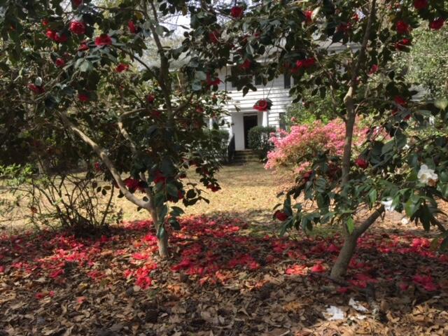 None Homes For Sale - 1110 Chuck Dawley, Mount Pleasant, SC - 3
