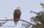 American Eagle , photo from second rear deck on Seaside Golf course.