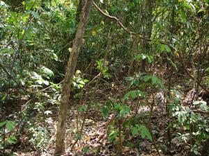 Terreno En Ventaen Alajuela, San Mateo, Costa Rica, CR RAH: 18-111