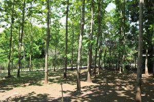 Terreno En Ventaen San Pedro, Turrubares, Costa Rica, CR RAH: 18-442