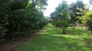 Terreno En Ventaen Sarapiqui, Sarapiqui, Costa Rica, CR RAH: 18-820