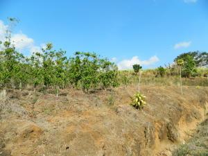 Terreno En Ventaen Chilamate, Poas, Costa Rica, CR RAH: 19-229