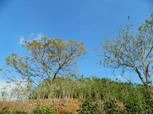 Terreno En Ventaen Chilamate, Poas, Costa Rica, CR RAH: 19-228